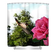 Rose And Rufous Shower Curtain