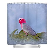 Rose Breasted Cockatoo In A Eucalyptus Tree Shower Curtain