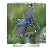 Rose Breasted Nuthatch Flying Shower Curtain