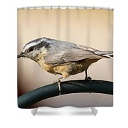 Rose Breasted Nuthatch Shower Curtain
