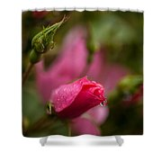 Rose Drop Shower Curtain