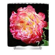 Rose Floral Fine Art Prints Pink Roses Flower Shower Curtain
