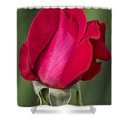 Rose Flower Series 1 Shower Curtain