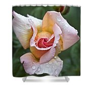 Rose Flower Series 11 Shower Curtain