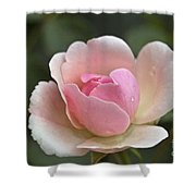 Rose Flower Series 12 Shower Curtain