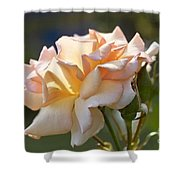 Rose Flower Series 15 Shower Curtain