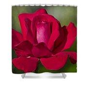 Rose Flower Series 2 Shower Curtain