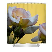 Rose Flower Series 3 Shower Curtain