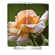 Rose Flower Series 4 Shower Curtain