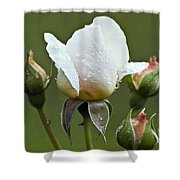 Rose Flower Series 5 Shower Curtain