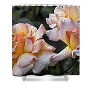 Rose Flower Series 7 Shower Curtain