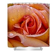 Rose Flower Series 8 Shower Curtain