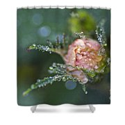 Rose Flower Series 9 Shower Curtain