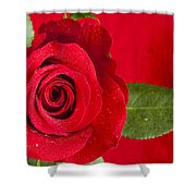 Rose Flower Wet 1 B Shower Curtain