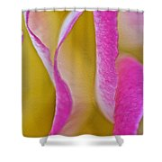 Rose Folds Shower Curtain
