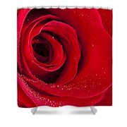 Rose Macro Wet 1 C Shower Curtain