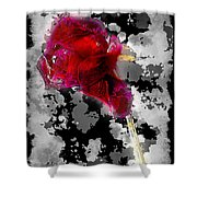 Rose Shower Curtain by Mauro Celotti