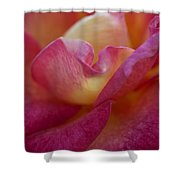 Rose Memories Shower Curtain