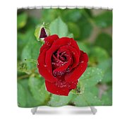 Rose Mist Original  Shower Curtain