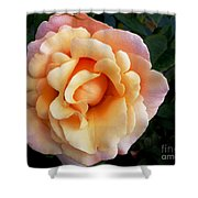 Rose Of Many Pastels Shower Curtain