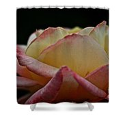 Rose Rising Shower Curtain