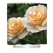 Rose Rosa Sp Just Joey Variety Flowers Shower Curtain