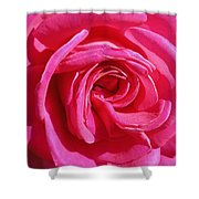 Rose Rose Shower Curtain