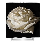 Rose Silver Anniversary Shower Curtain