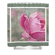 Rose Triptych 11 Shower Curtain