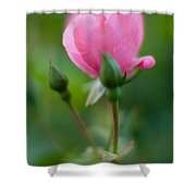 Rose With Pink Glow Shower Curtain