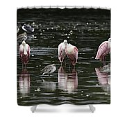 Roseate Reflections - Spoonbill Nature Scene Shower Curtain