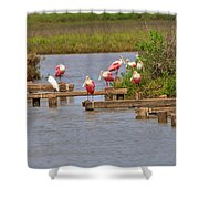 Roseate Spoonbills And Snowy Egrets Shower Curtain