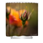 Rosebud Details Shower Curtain