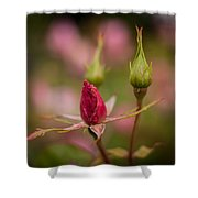 Rosebud Standout Shower Curtain