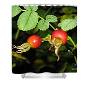 Rosehips Shower Curtain