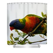 Rosella Splendour  Shower Curtain