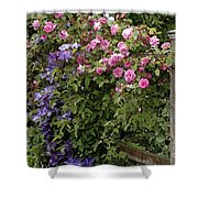 Roses On The Fence Shower Curtain