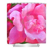 Roses Perfectly Pink Shower Curtain