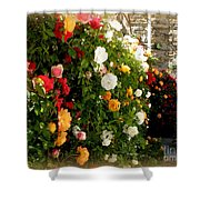 Roses Roses Everywhere Shower Curtain