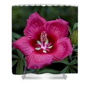 Rosey Blossom Shower Curtain
