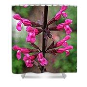 Rosey Leaf Sage Shower Curtain