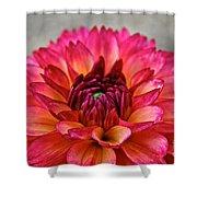 Rosy Dahlia Shower Curtain