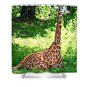 Rothschild Giraffe Shower Curtain