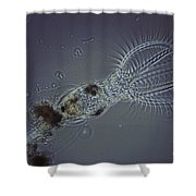 Rotifer Stephanoceras Shower Curtain