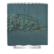 Rotifera Kellicottia Shower Curtain