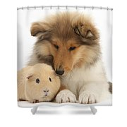Rough Collie Pup And Yellow Guinea Pig Shower Curtain