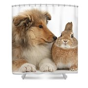 Rough Collie Pup With Rabbit Shower Curtain