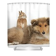 Rough Collie Pup With Sandy Netherland Shower Curtain