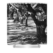 Row Of Oaks - Black And White Shower Curtain