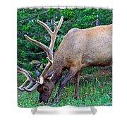Royal Bull Elk Shower Curtain